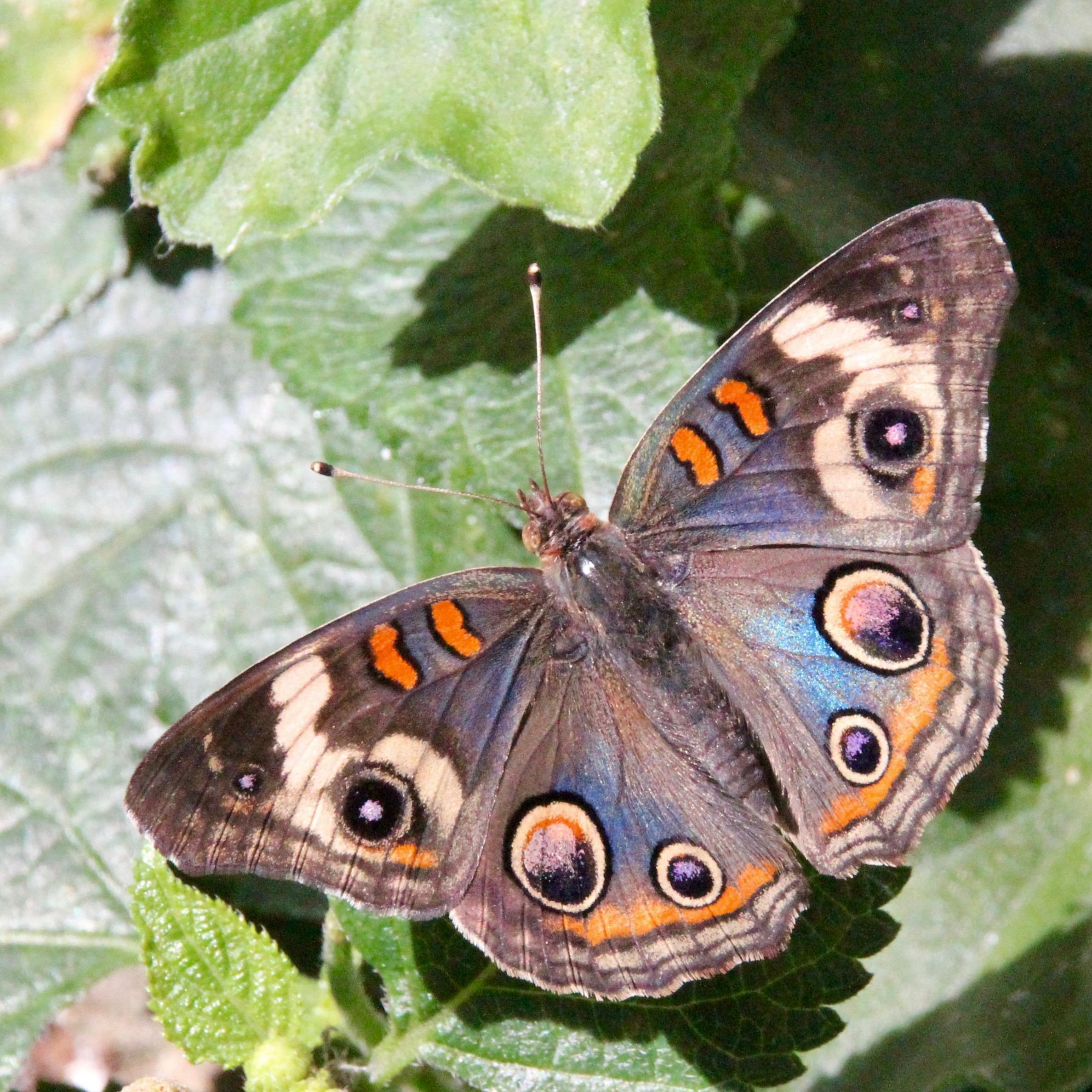 Butterflies (5).jpg