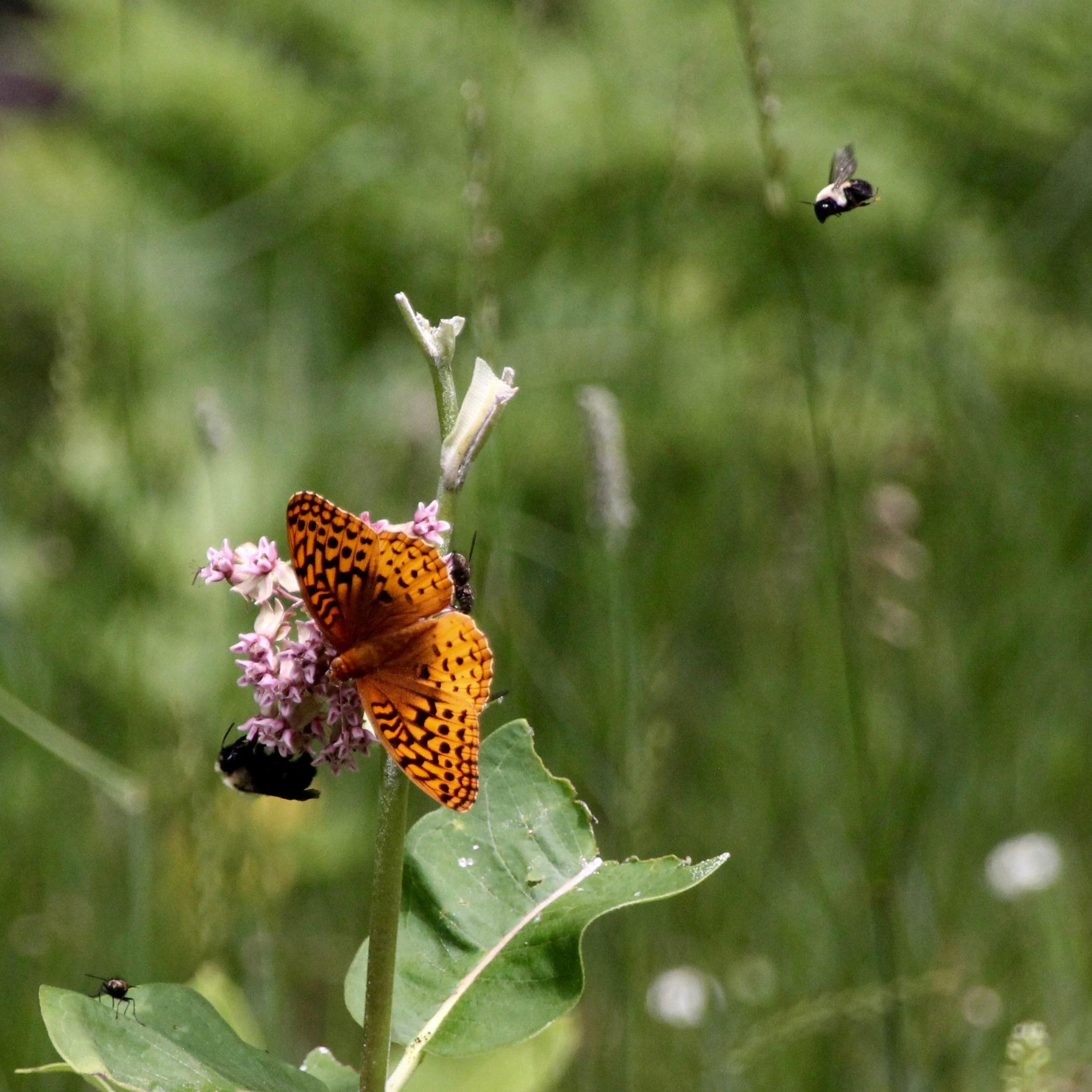 Butterfly (4).jpg