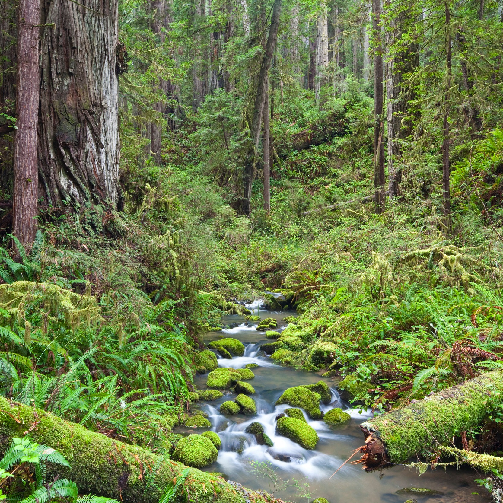 Headwaters_Forest_Reserve_in_California_%2818328366464%29.jpg