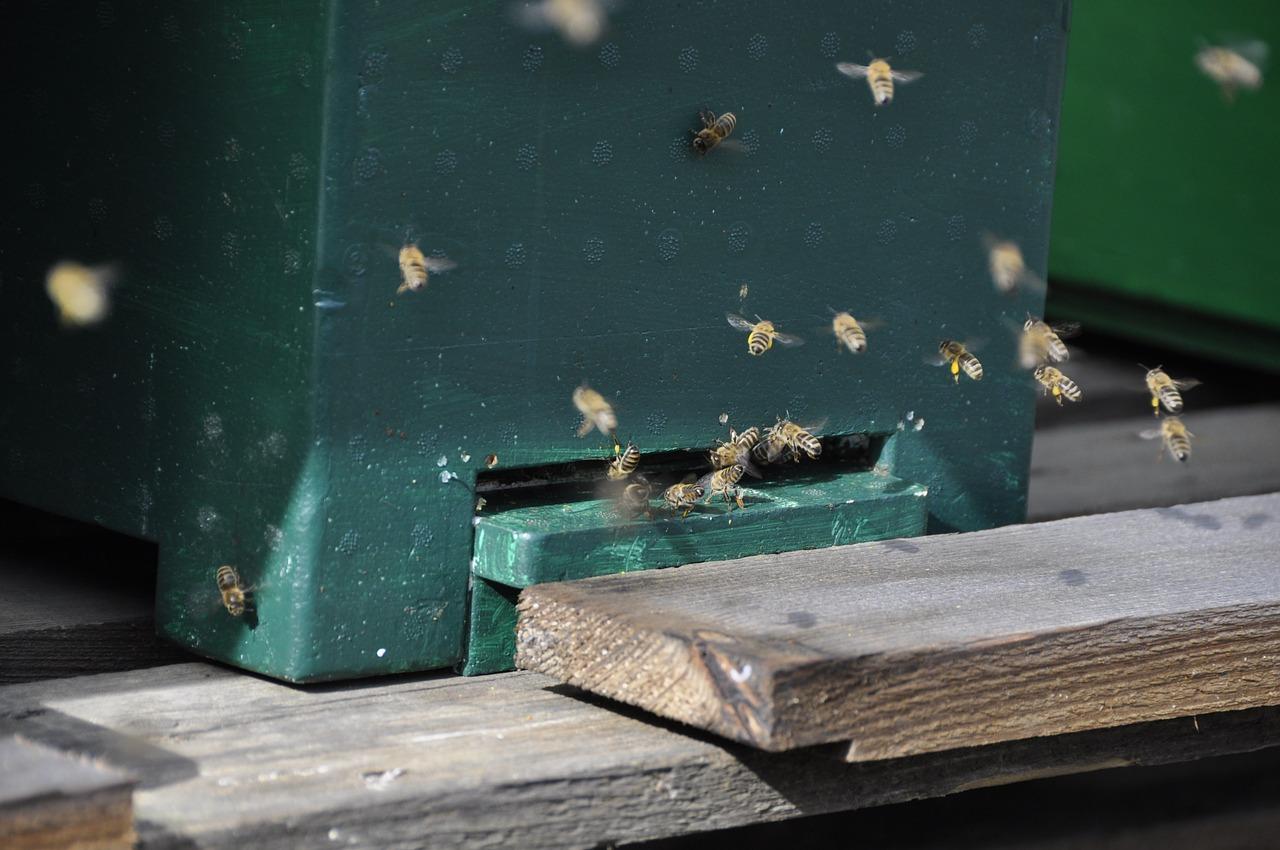 bees-1348056_1280.jpg