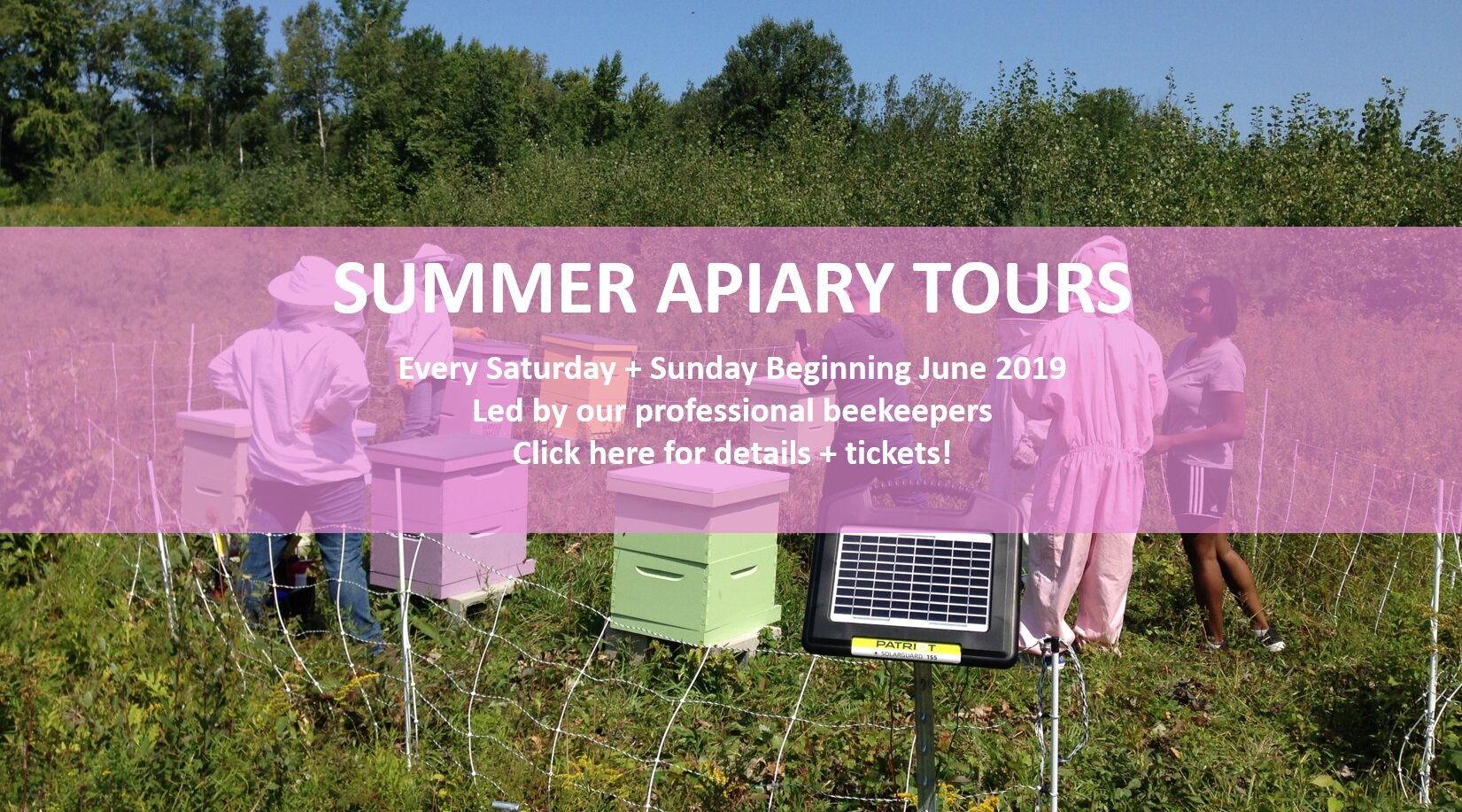 APIARY TOURS PICTURE.jpg