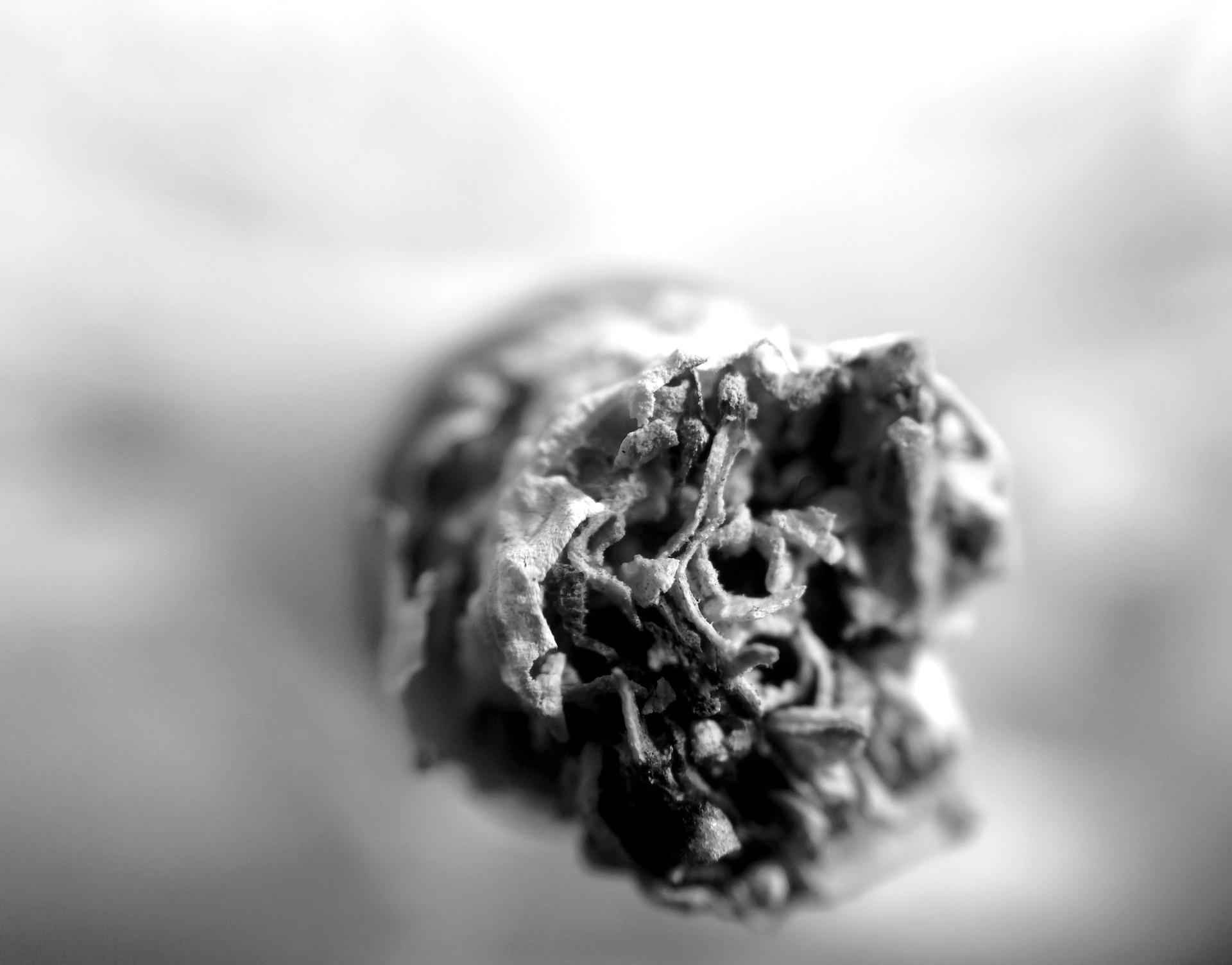 Close-up of a lit cigarette