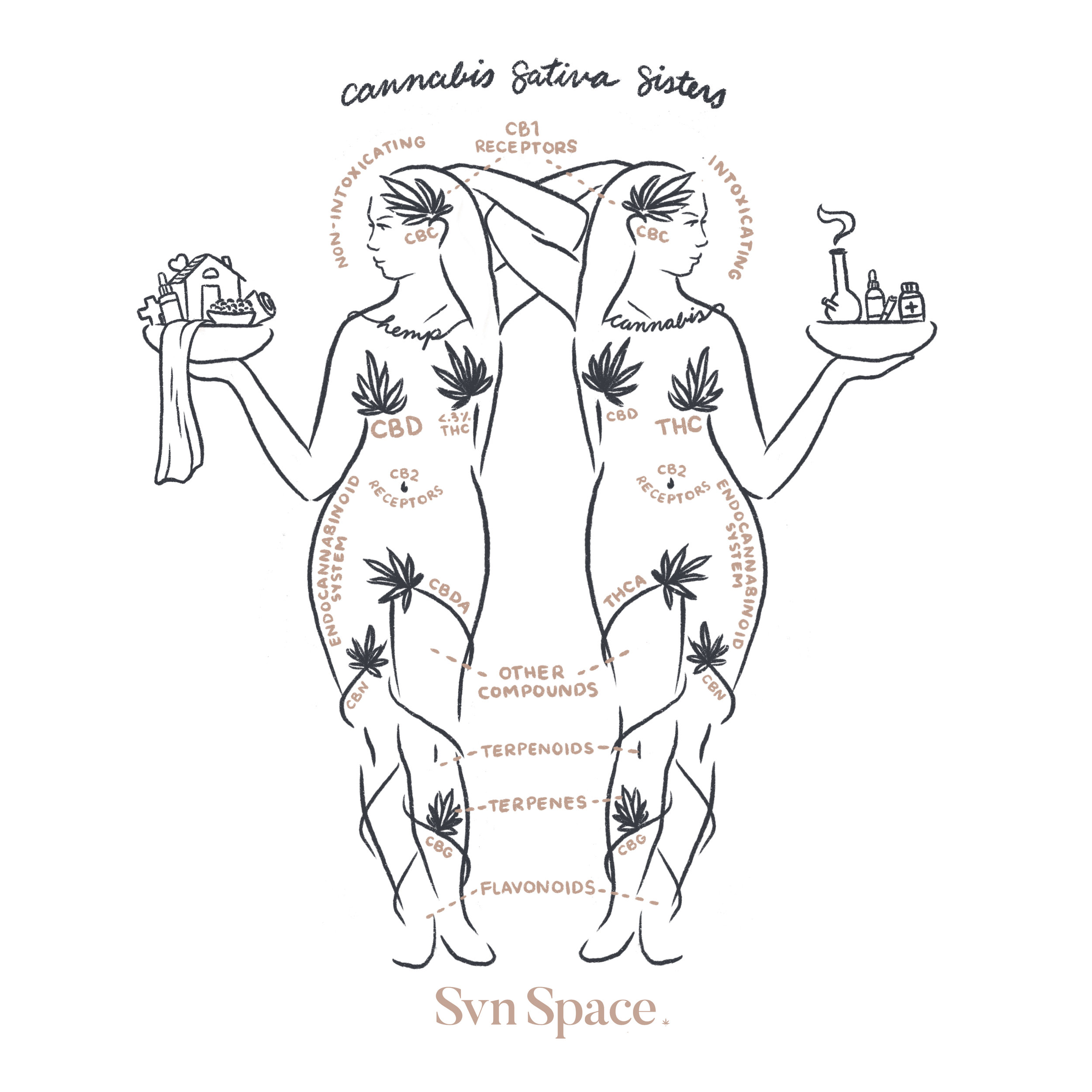 Svn Space Cannabis Sativa Sisters