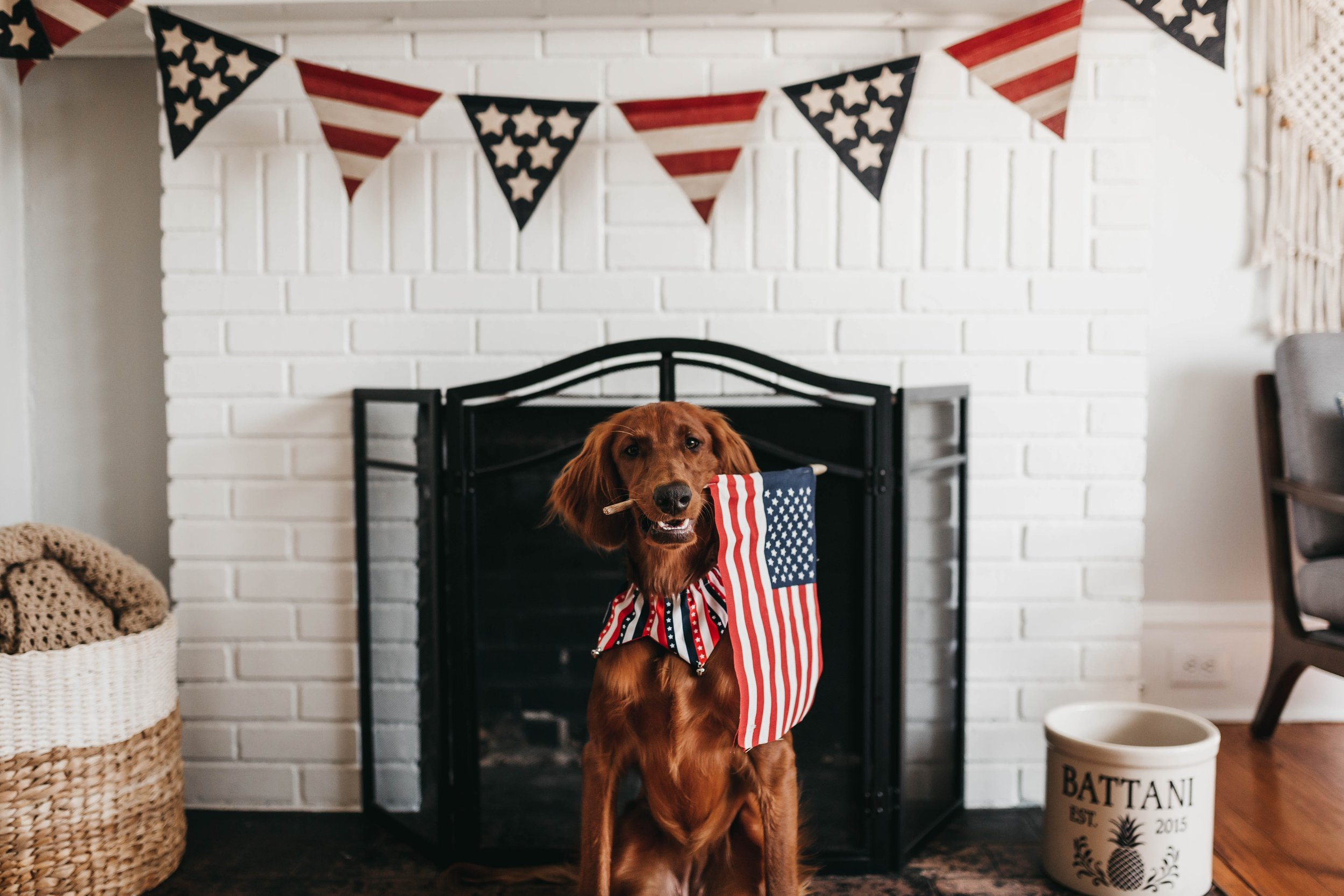 CBD for your pets on Fourth of July