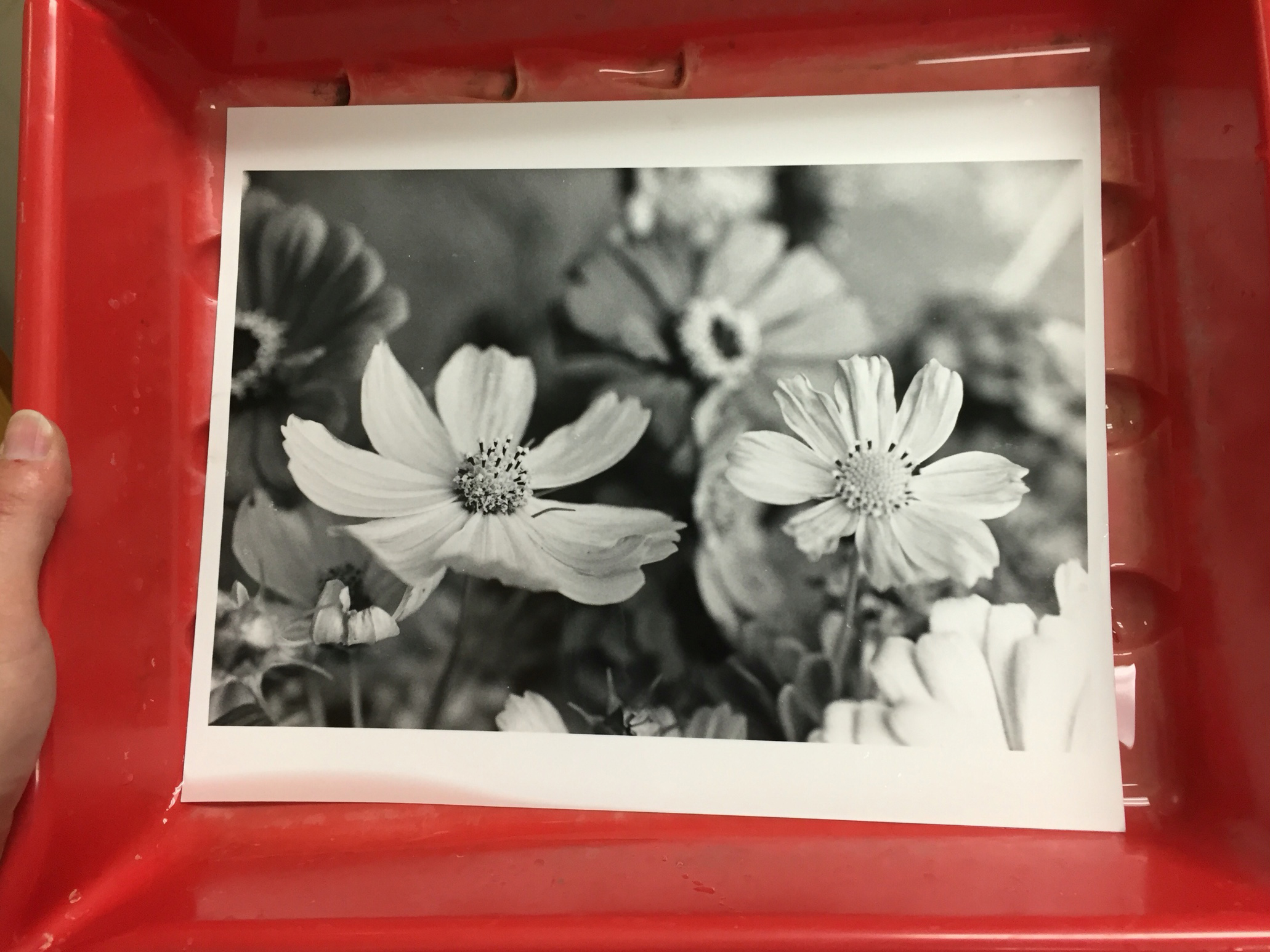 A fresh darkroom print