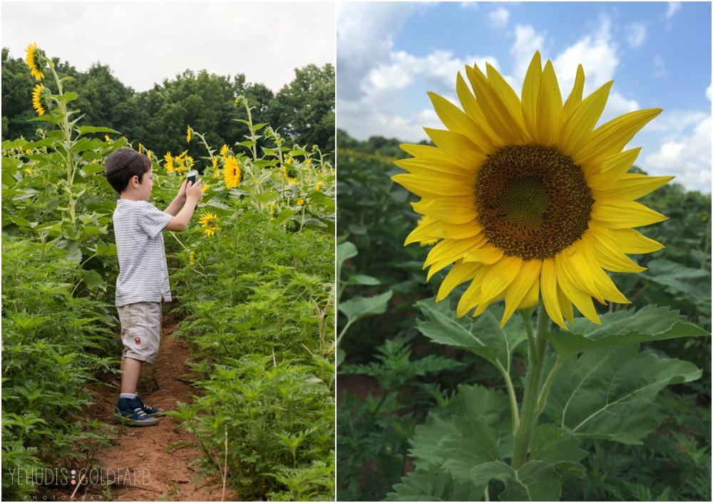 Sunflower-Mini-Sessions-Yehudis-Goldfarb-Photography_0003.jpg