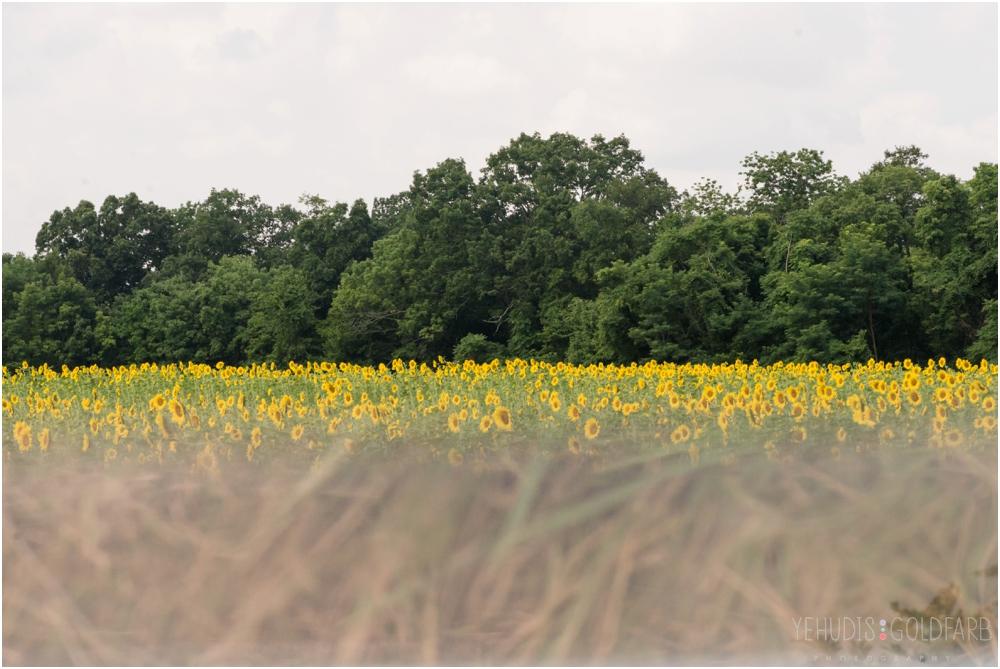 Sunflower-Mini-Sessions-Yehudis-Goldfarb-Photography_0004.jpg