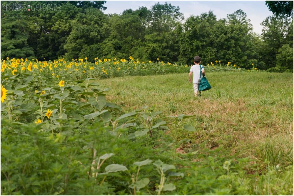 Sunflower-Mini-Sessions-Yehudis-Goldfarb-Photography_0009.jpg