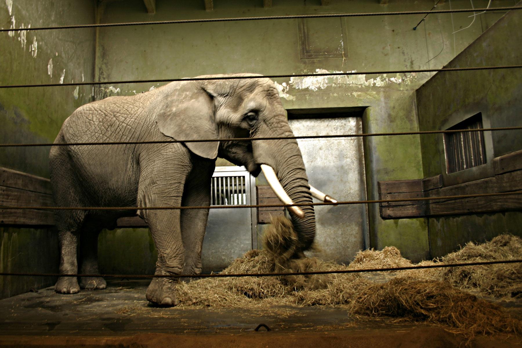 stockvault-elephant-in-cage97313.jpg