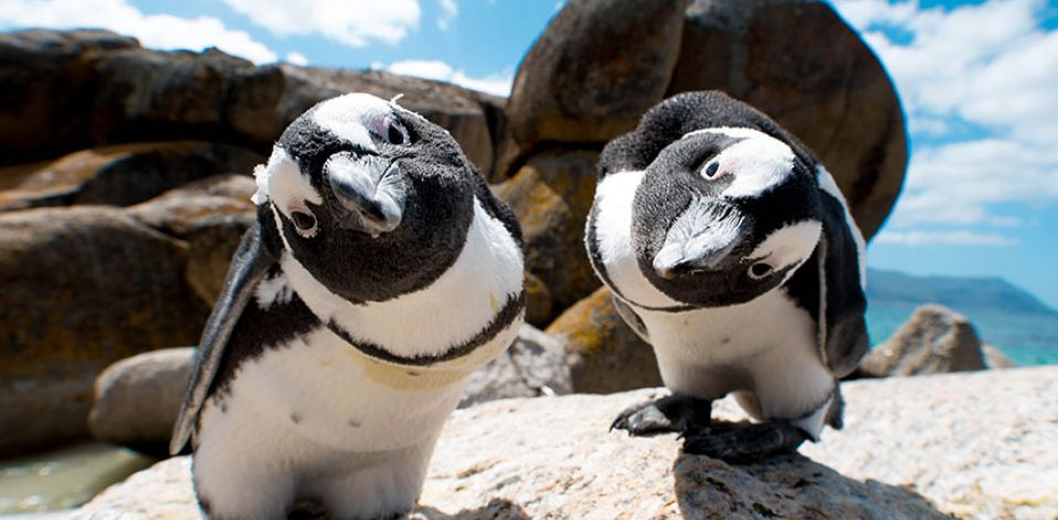 Day 9 - Today we get to visit Cape point and see the penguins. Today can be done at your leisure, If penguins are not your thing, you can skip this activity and do as you please. Today is also our last full day in Cape Town.