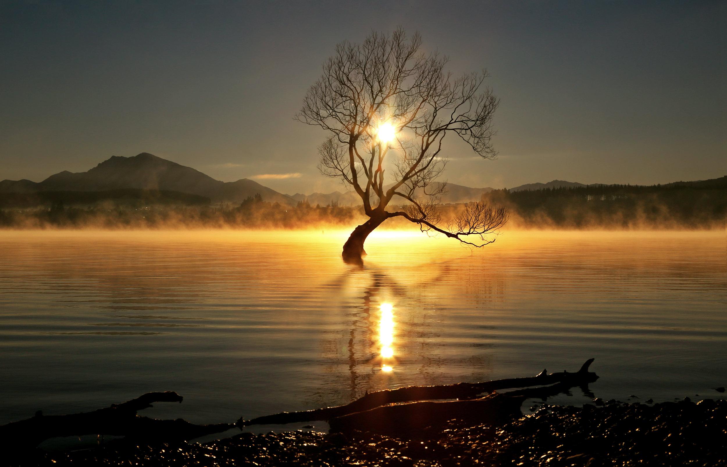 TREE AGAINFINAL 2.jpg
