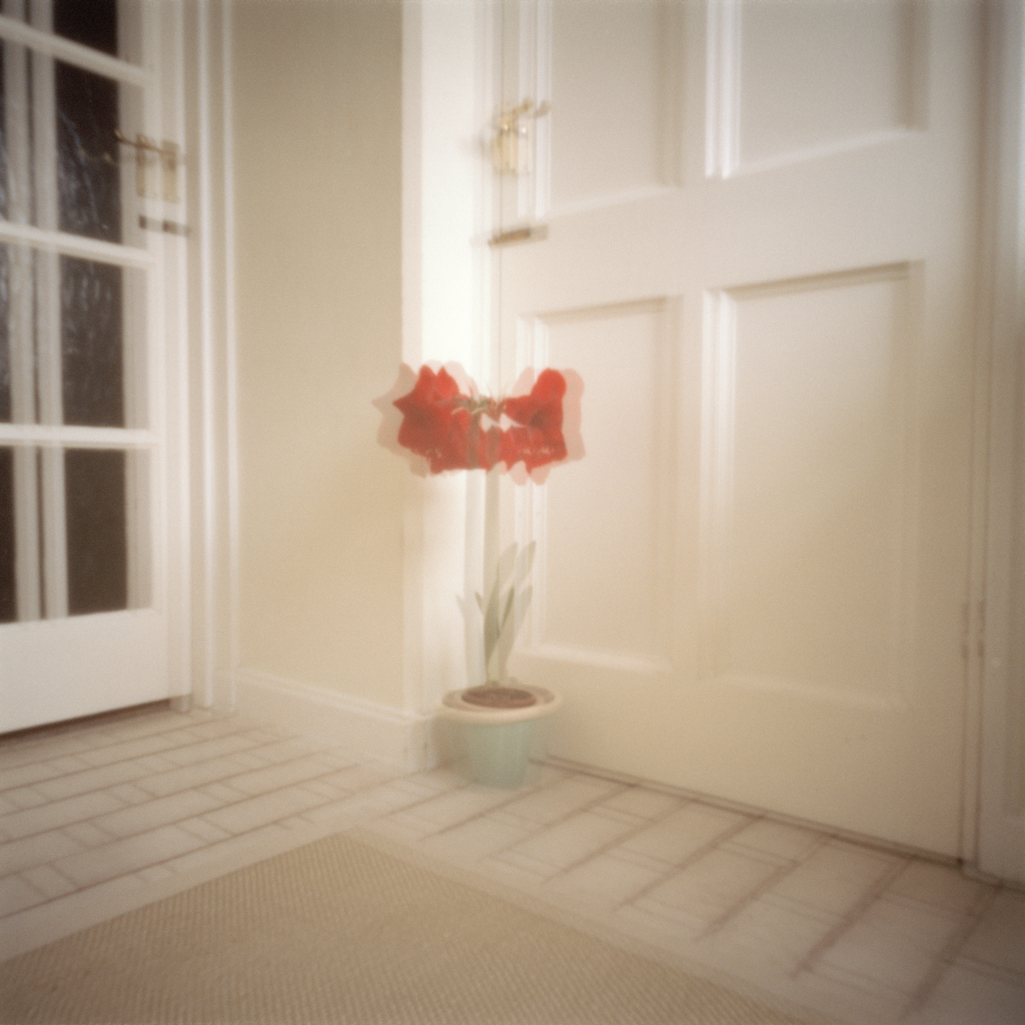 shoe room with red flower.jpg
