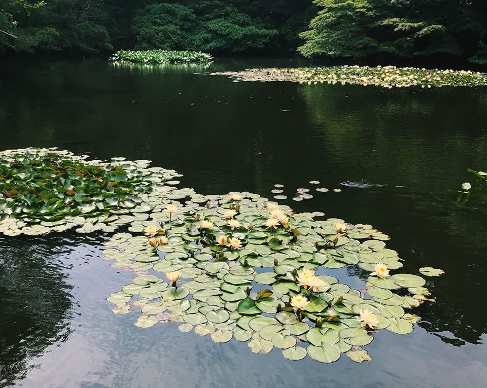 japanese gardens water lilies