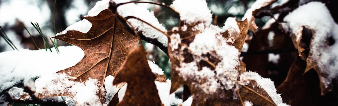 Frosty-leaves-v2.png