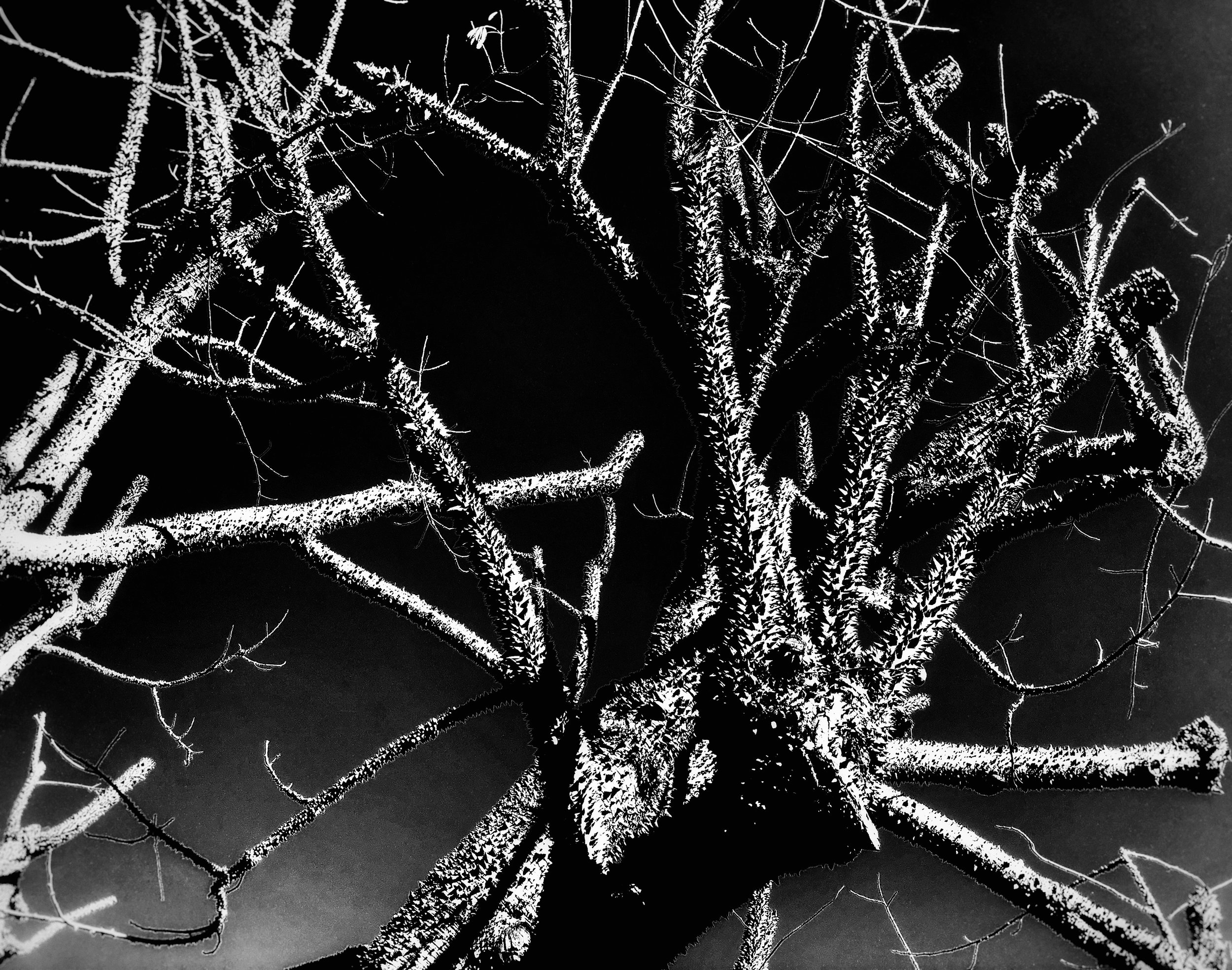 Noir Branches.jpg