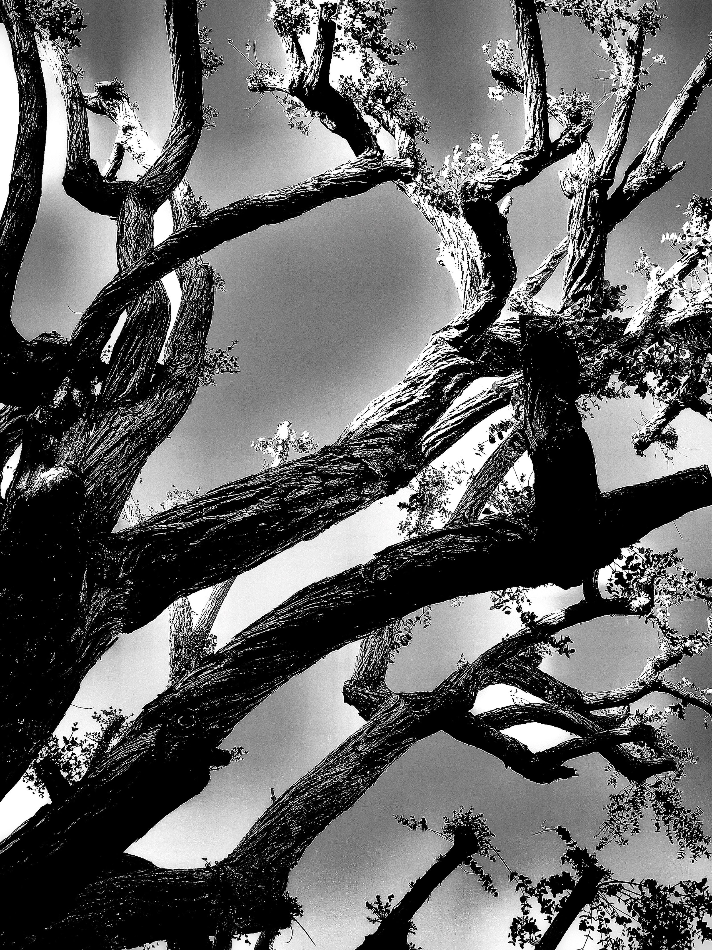 film set branches.jpg