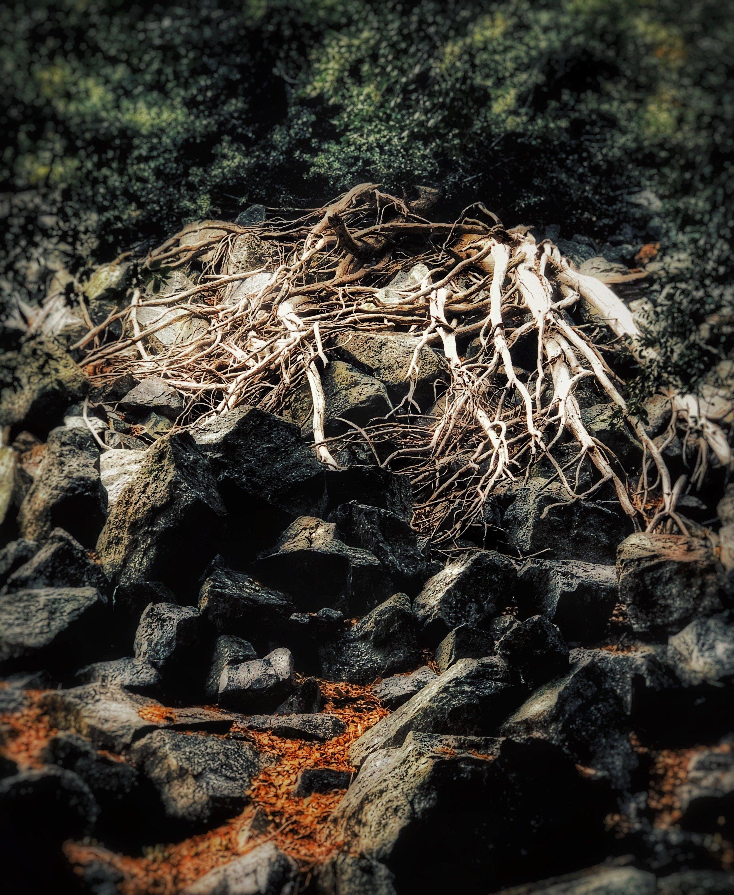 baldy branches.jpg