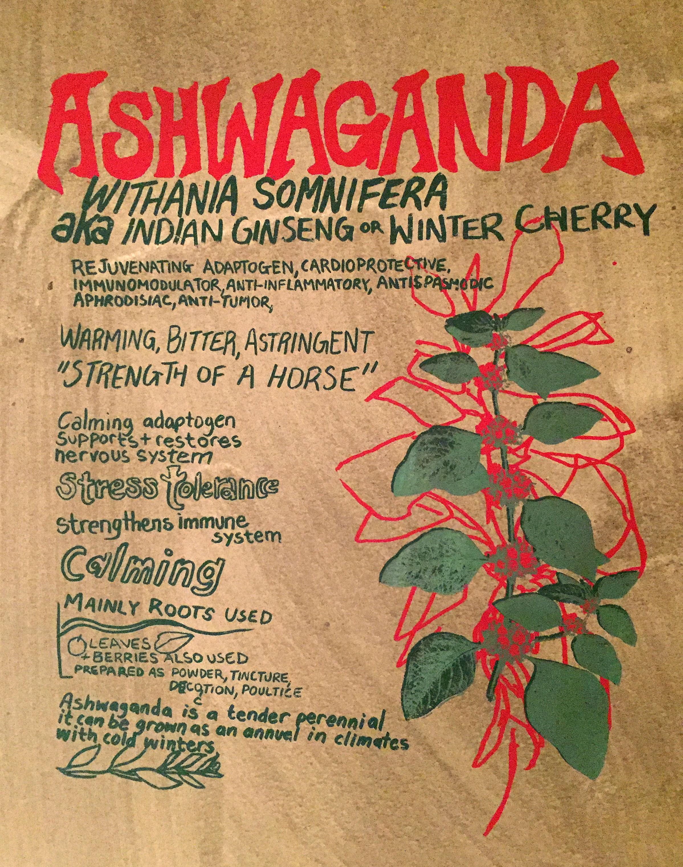 ashwaganda.jpg