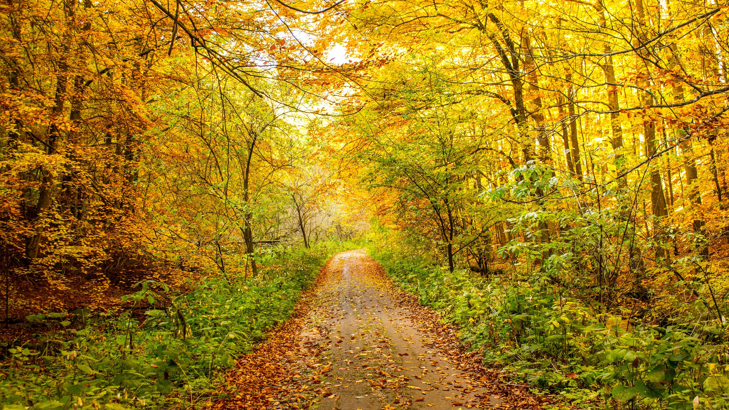 Your Brain on Nature: Forest bathing and reduced stress - Studies show shinrin-yoku, also known as forest bathing or time spent in green spaces, can reduce the stress hormone cortisol and increase your immune defense system.Mother Earth News, January 2013