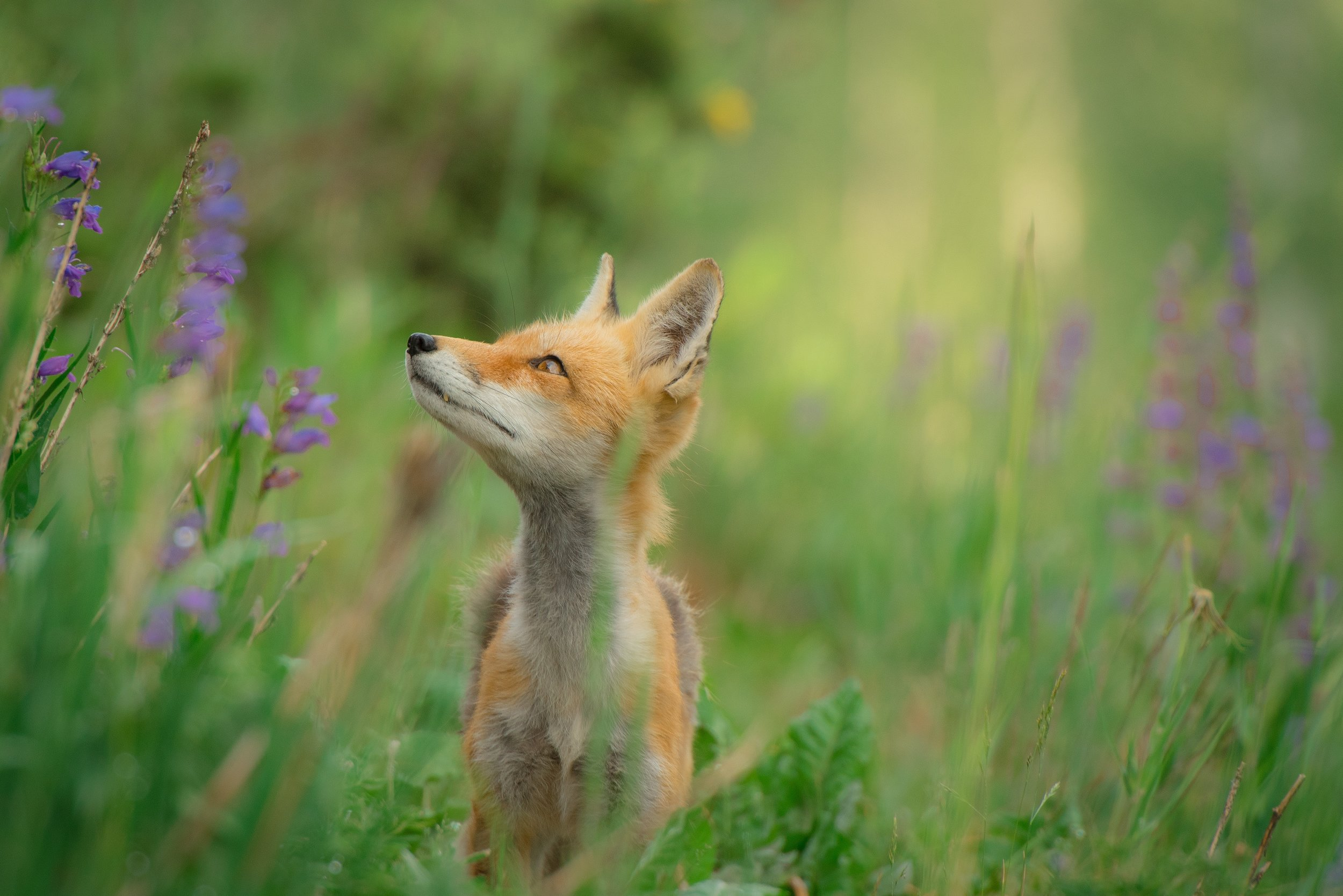 Wildlife guide - The National Wildlife Federation