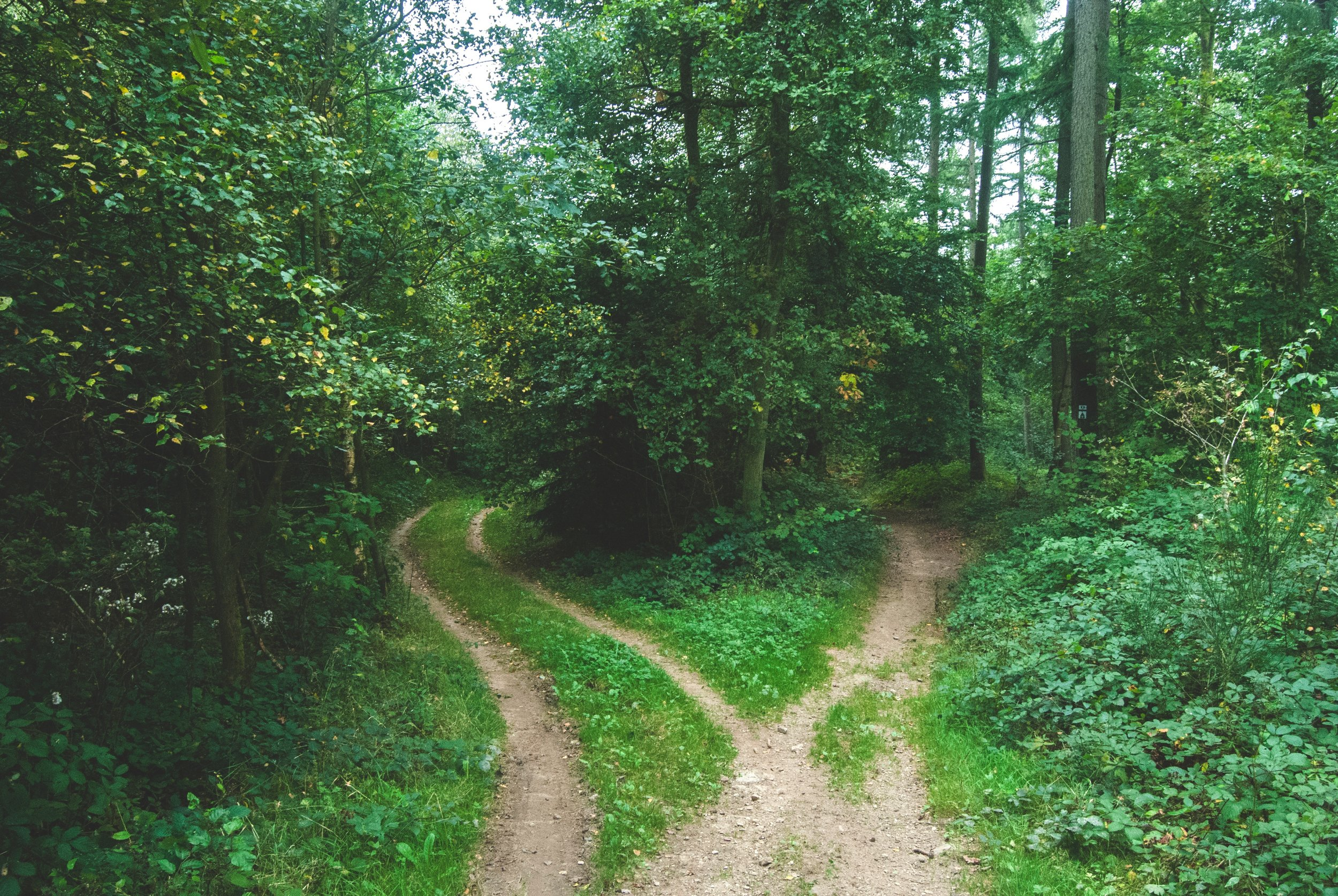 An animated guide to nature's best wayfinding secrets - Learn to navigate with the moon, stars, trees, and more.Atlas Obscura, July 2017