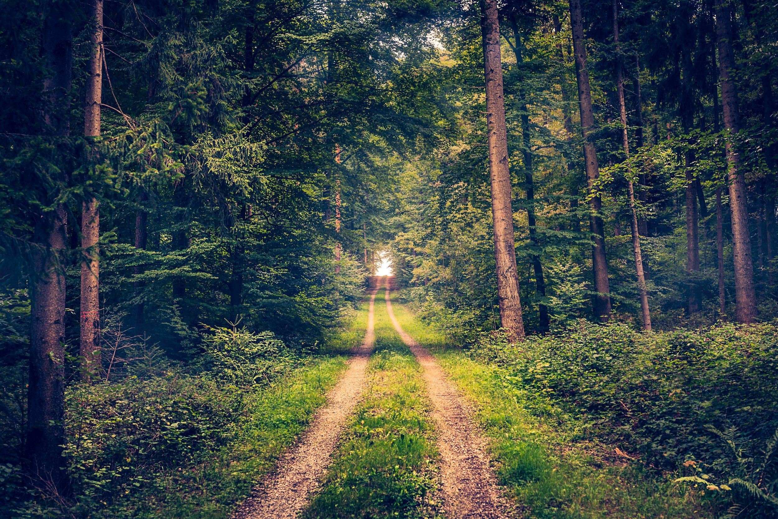 Your guide to forest bathing - Learn to take a step away from stress and towards the presence of nature, using mindfulness and meditation to feel peace while surrounded by wild earth.Utne Reader, June 2018