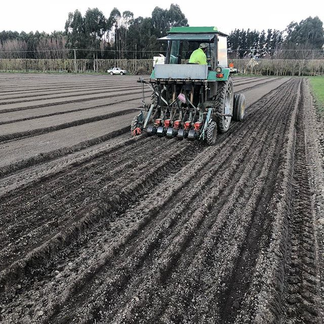 Working on getting in some red onions sown tonight before the rain comes. 🚜🤞