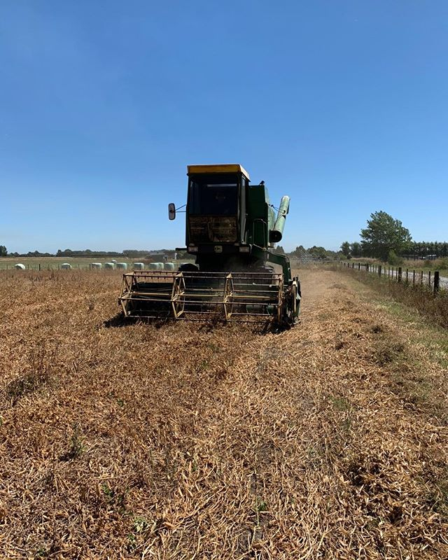 Busy day today. Harvesting pea seed today as well. The old John Deere 955 working hard.
