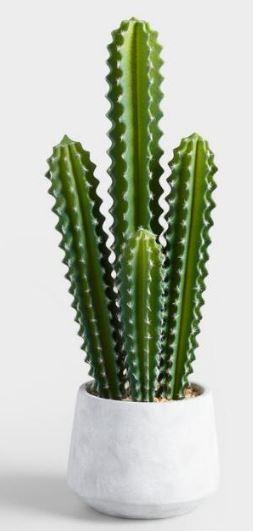 Cactus plant.JPG