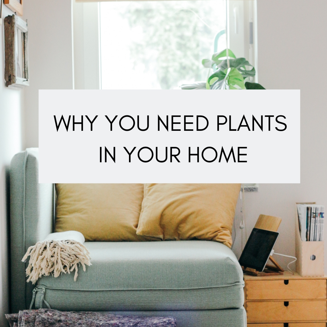 WHY YOU NEED PLANTS IN YOUR HOME.jpg