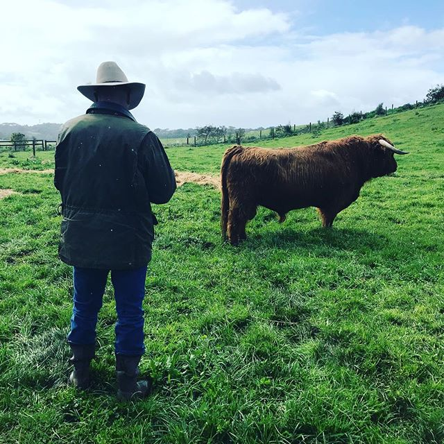 Full weekend of chauffeuring Richard our wonderful cattle judge around Victorian properties for the Vic Highland Cattle Breeders, On Farm Challenge. 1000+km #highlandcattle #avochhighlands