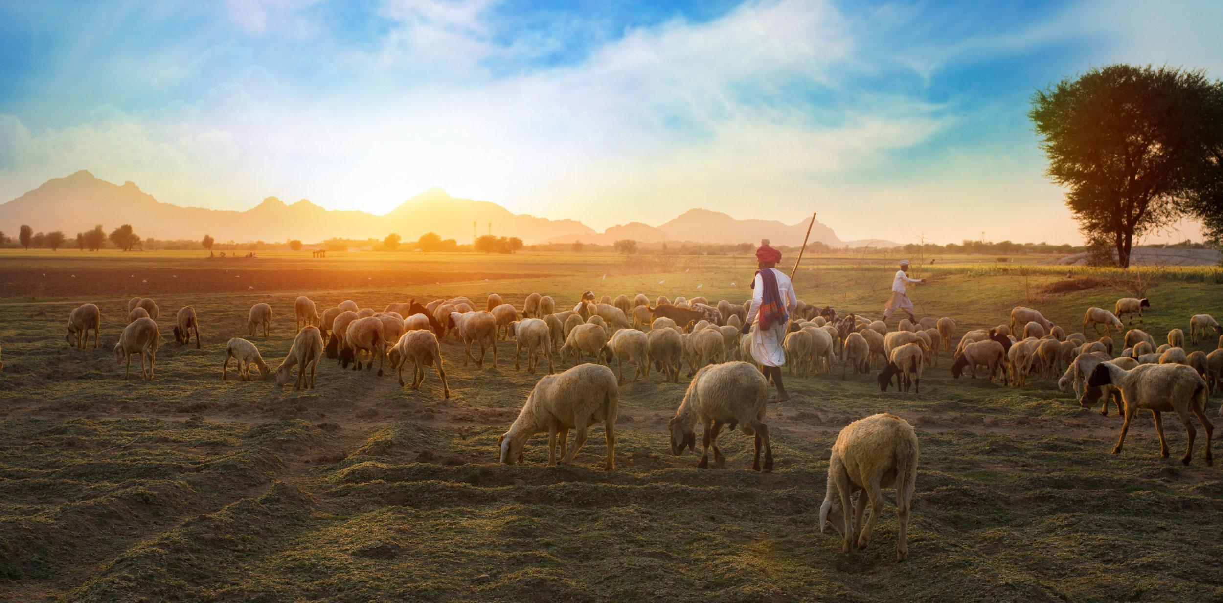 3 farmers with goats.jpeg