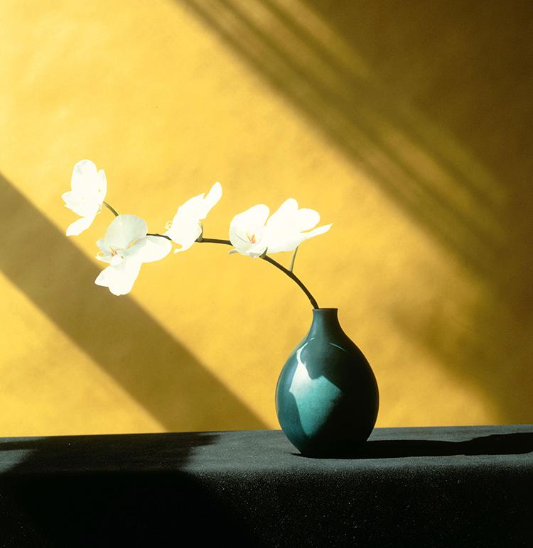 Orchid_1982_C_Robert_Mapplethorpe_Foundation.jpg