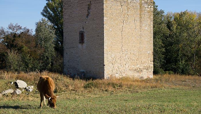 torreon-defensa-fuentes-duero.jpg