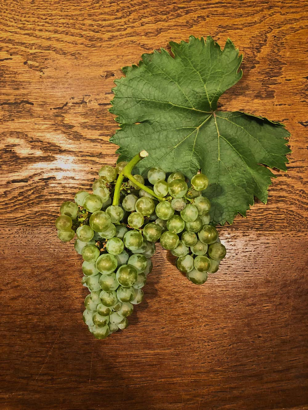 Verdejo grape and leaf