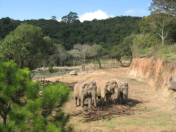 Elefantes no Zooparque de Itatiba / Imagem por Hans Furrer Acervo Hans Furrer