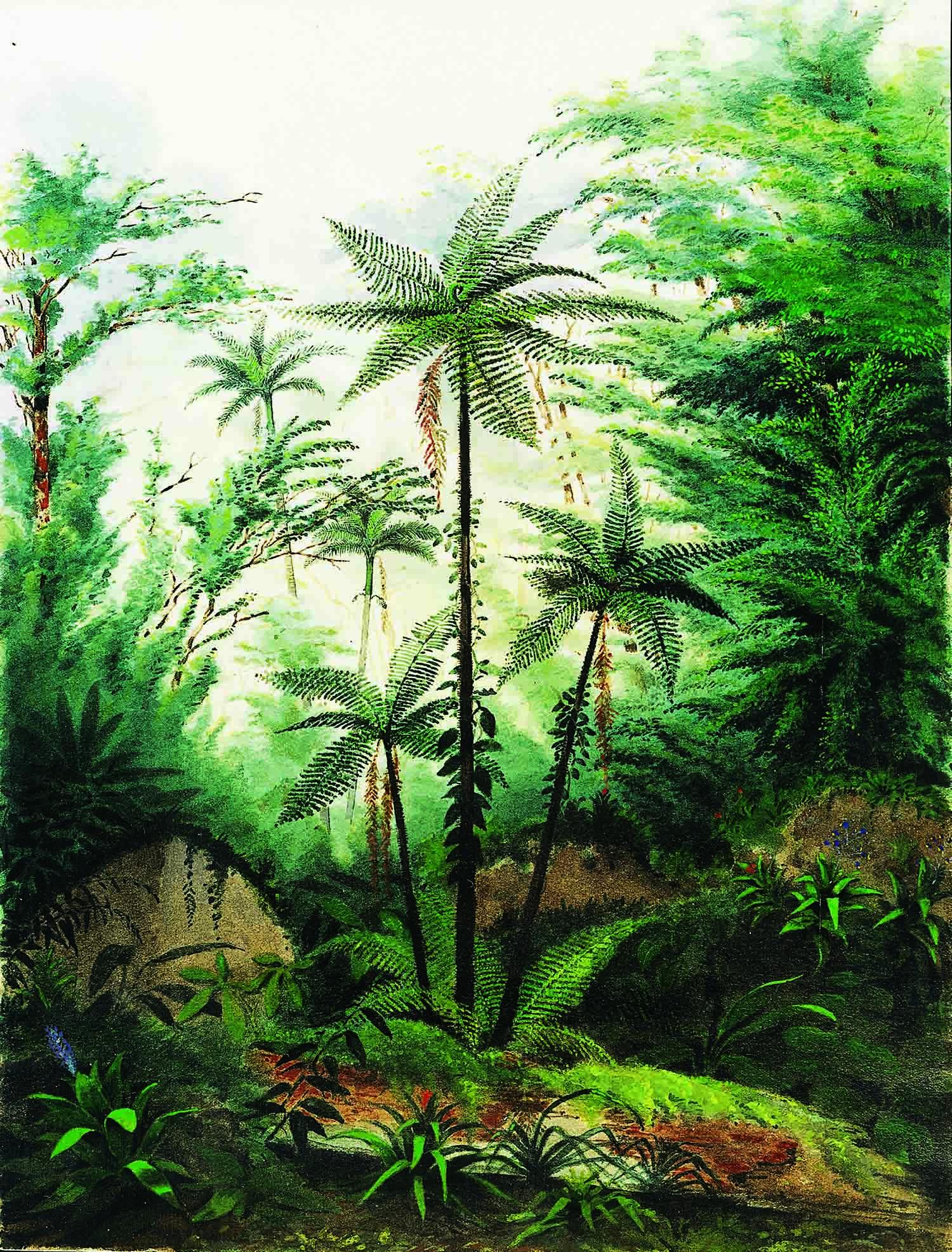 """""""Coin de Forêt avec Fougères Arborescentes"""", aquarela com guache e verniz, por William Michaud, século 19 Acervo Musée Historique Vevey, Suíça"""