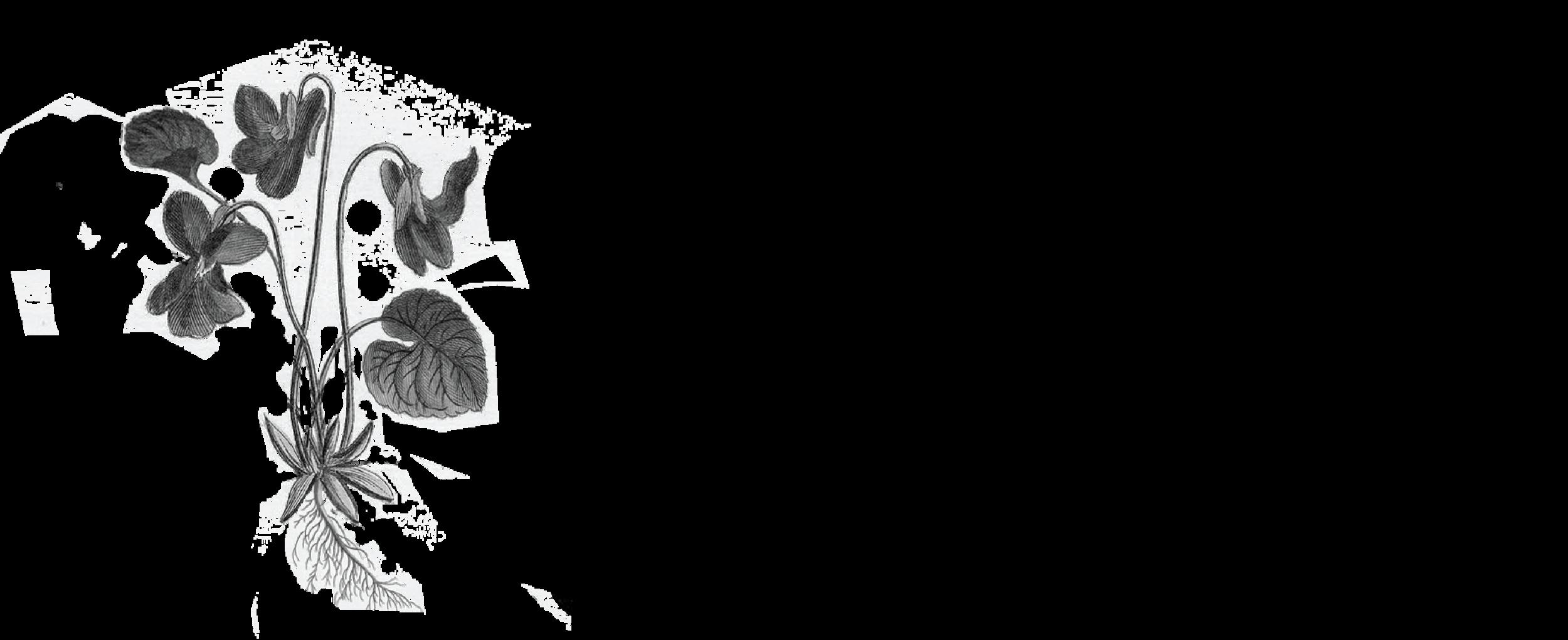 Version 3_Logo_PMS-01.png
