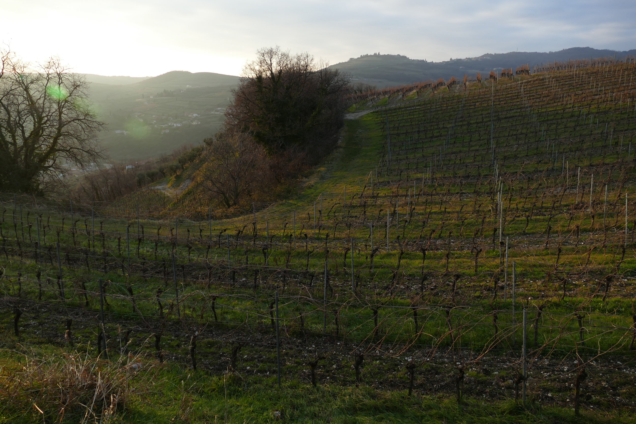 Azienda Agricola Corte Sant'Alda, high in the hills of Valpolicella