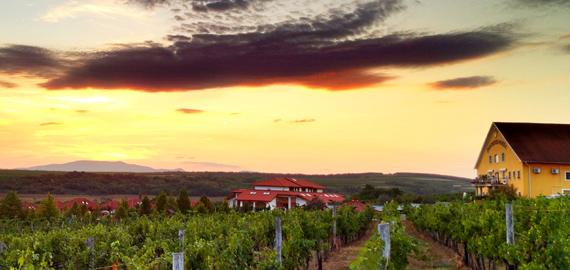 Korona winery.jpg