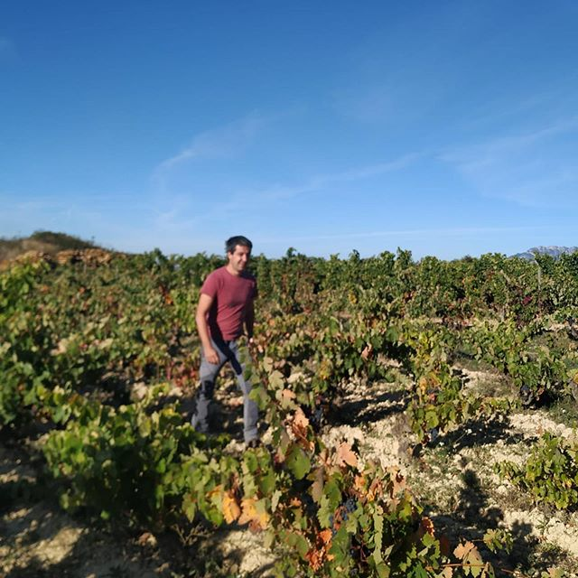 Bedales of Borough Wine Manager @mcasque is with @thormanhunt on an epic wine tour around Spain: La Rioja, Rueda and Manchuela! * * #sommlife #rioja #riojawine #vineyards #harvest #winemakers #winesofspain #sommelier #winebar #winetasting