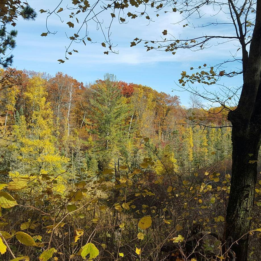 Fall beauty at Mille Lacs Kathio State Park