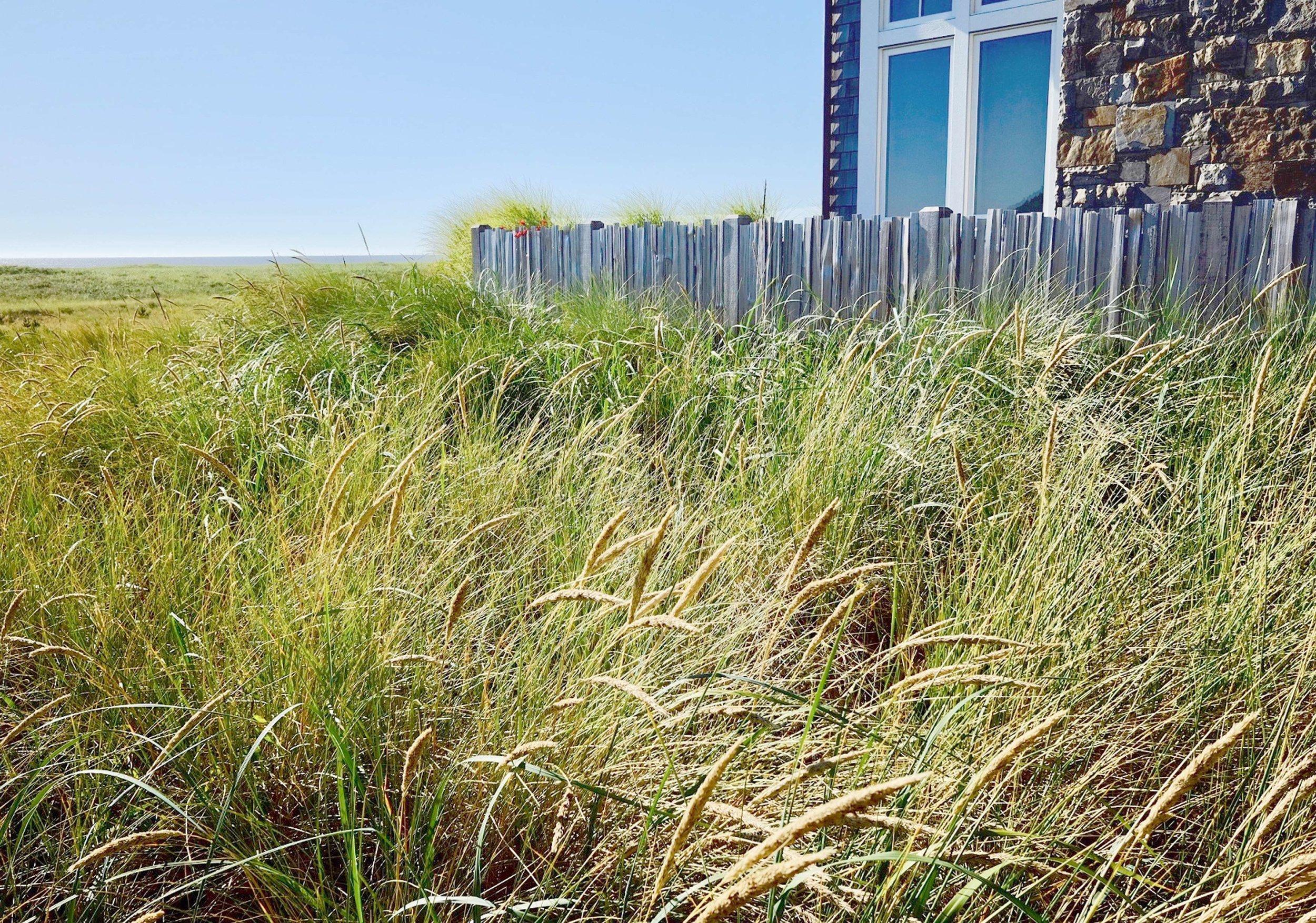 sea-grass.jpg