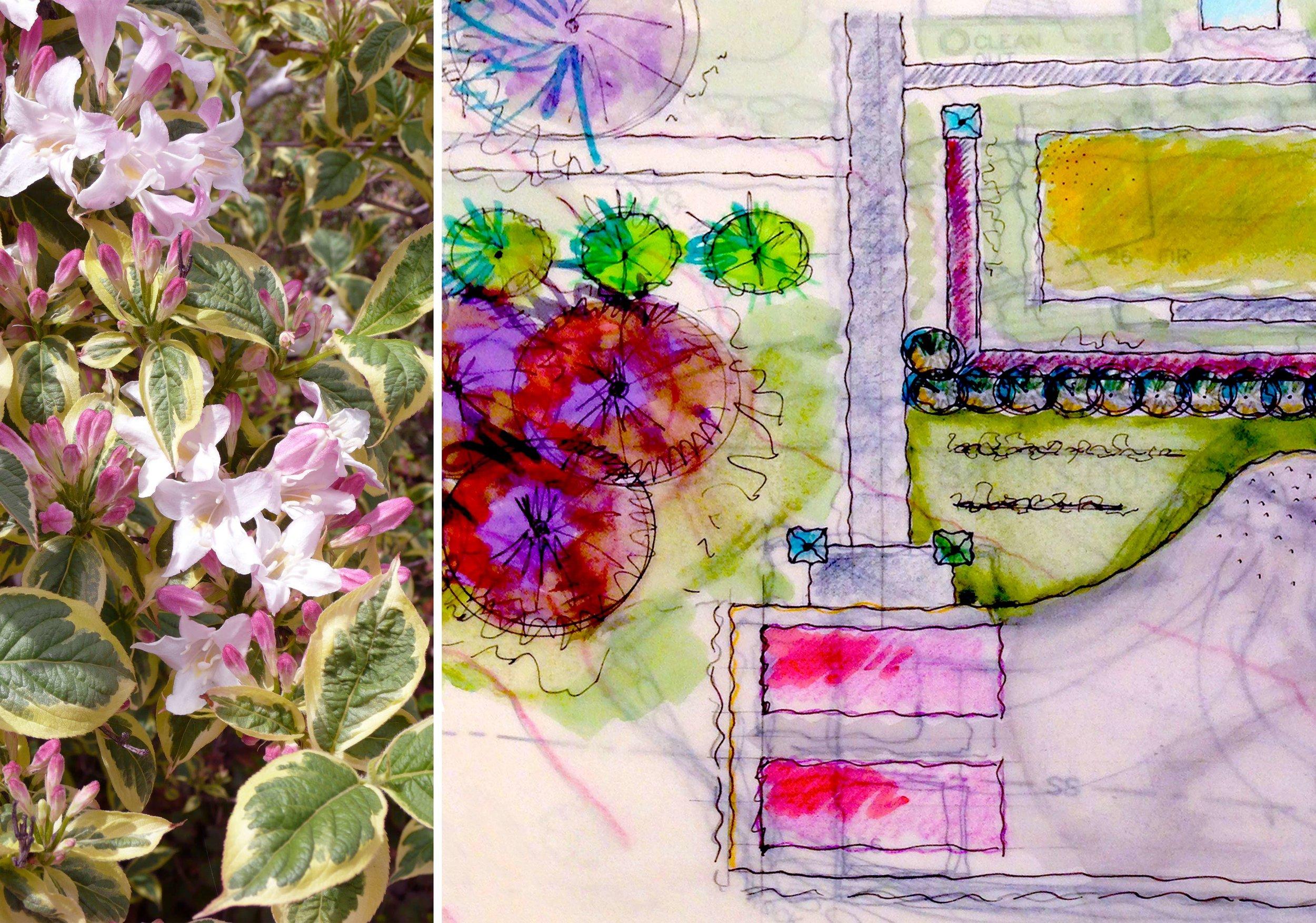 flower_drawings.jpg