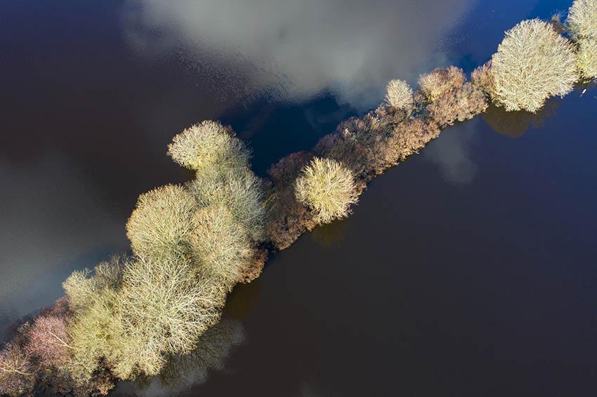 rangée arbres brière.jpg