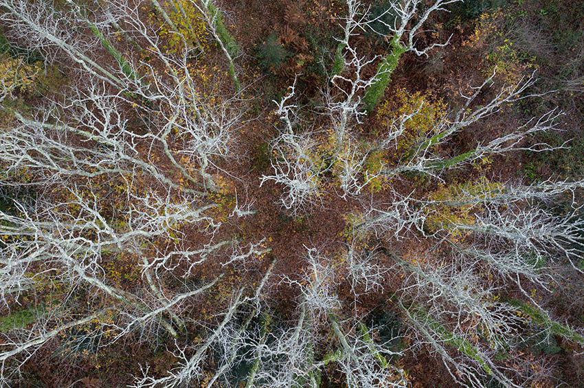 un-arbre.jpg