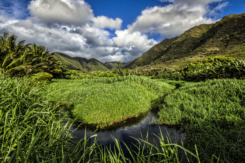 Halawa Valley - Taro and Uplands.jpg