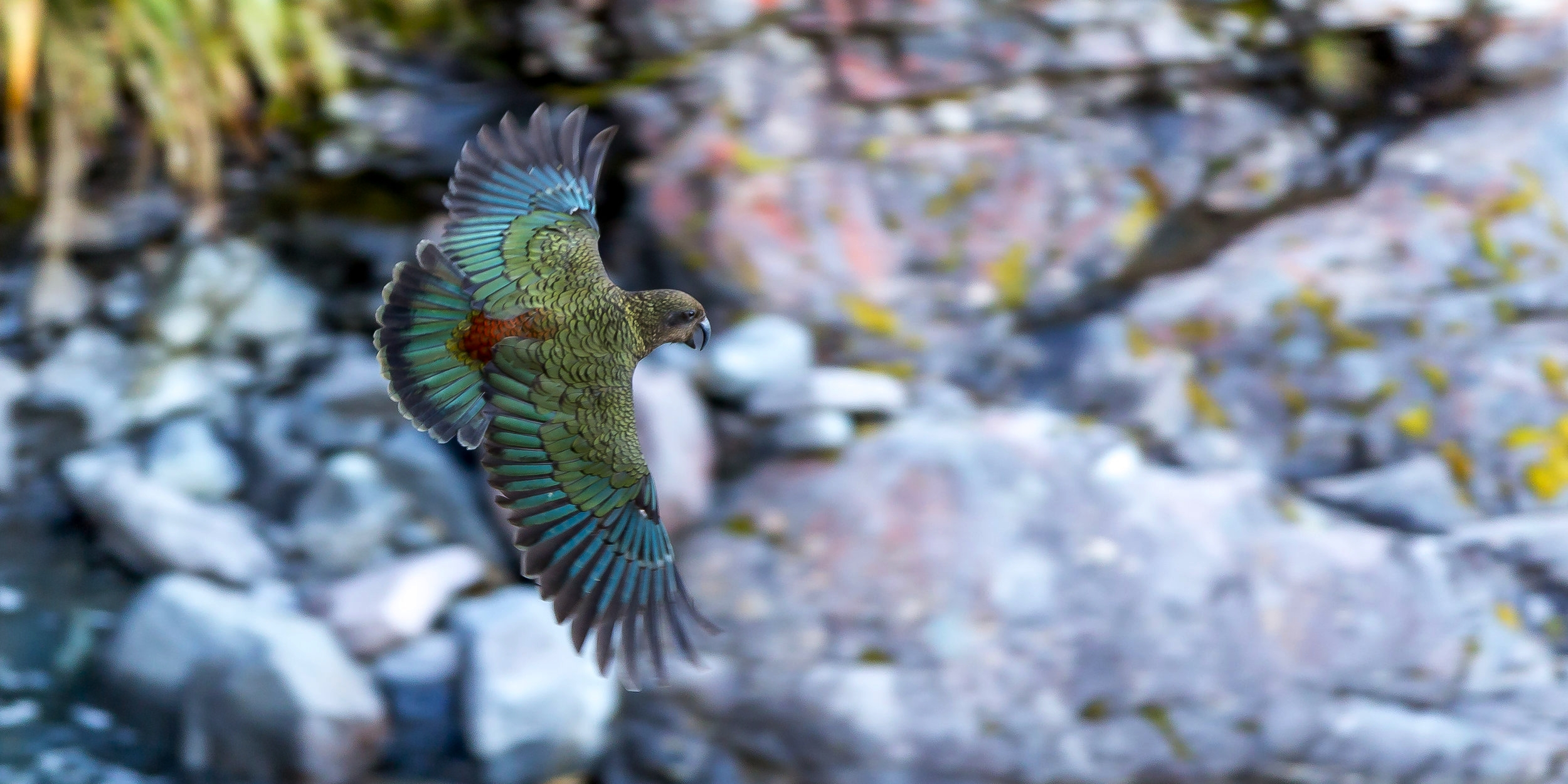 Nature and conservation -