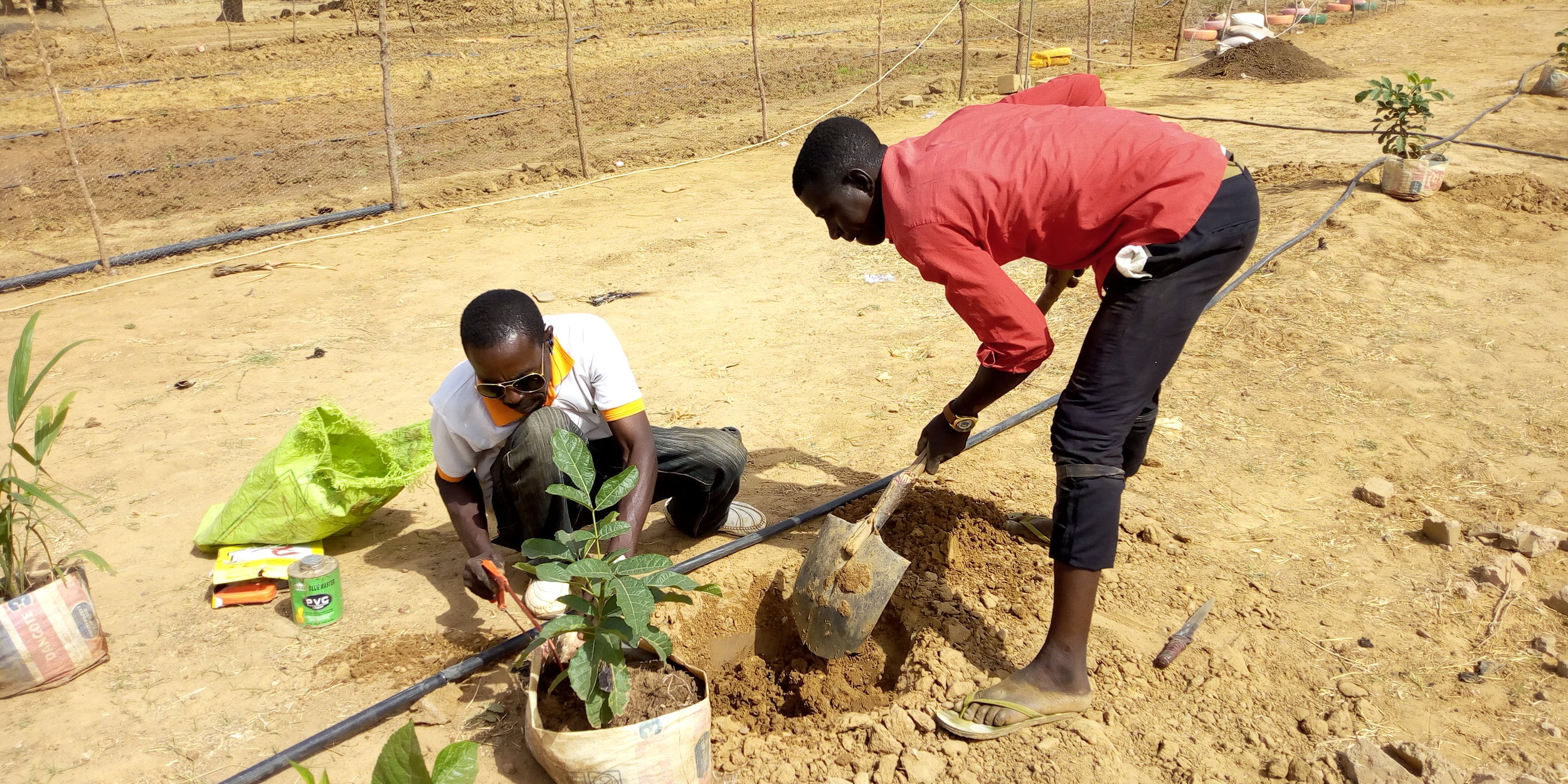 New plants help give definition to the space. Credit: UN-Habitat