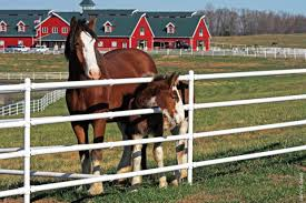 Warm springs ranch horses.jpg